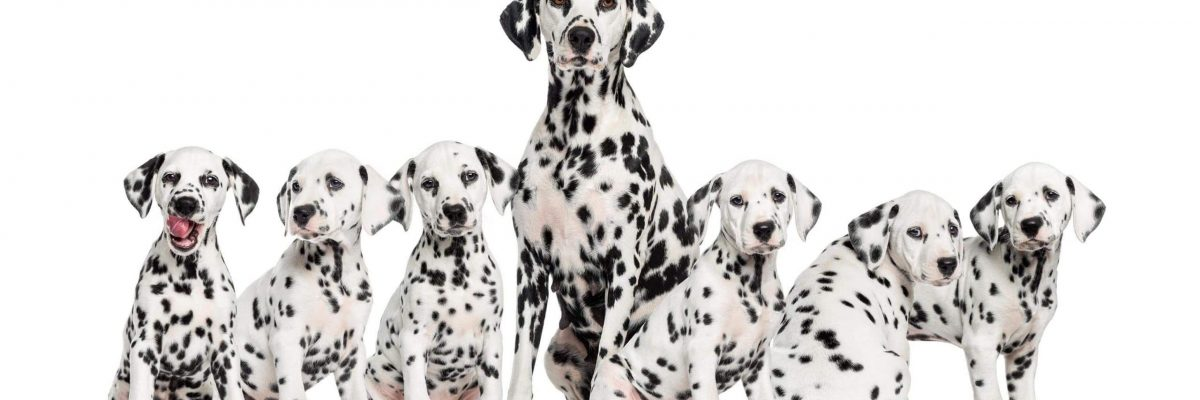 puppies-for-sale-today-blog (10)