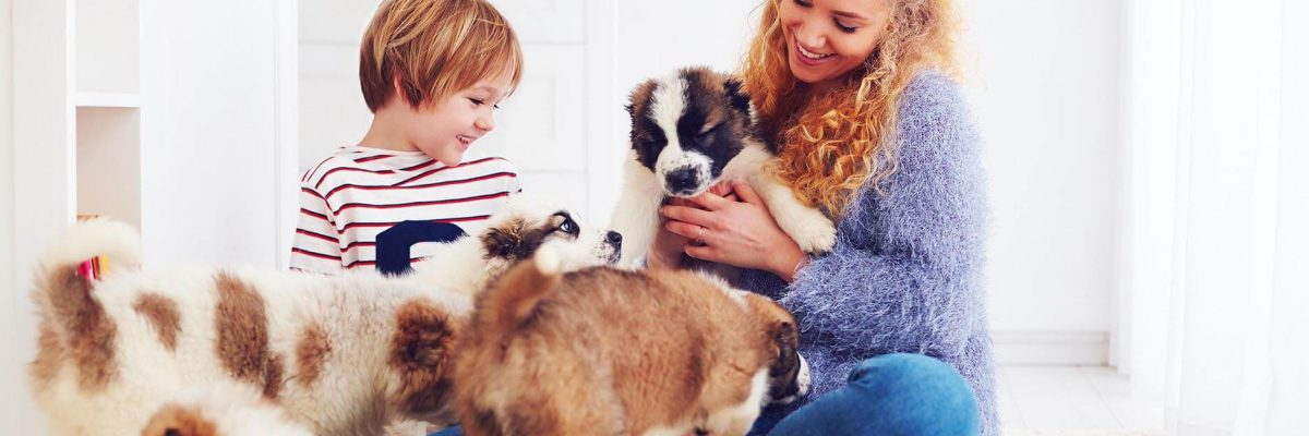 puppies-for-sale-today-blog (19)